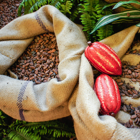 Learn the cacao process from bean to bar and taste the wonderful Ecuadorian artisan chocolate.
