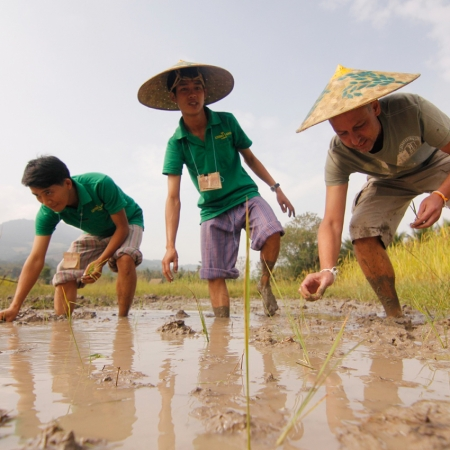 The 'Rice Farming' activity is a great success, bringing groups together while introducing a vital element of Laotian life.