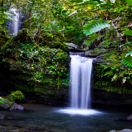 Explore the only tropical rainforest in the U.S. Diverse ecosystem that spans 28,000 acres.  Discover a multitude of plant and animal life through the magnificent forest.
