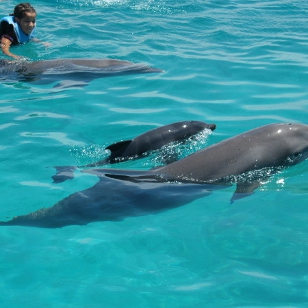 Dolphin Academy opened in 2002, and now has 20 Coastal Bottlenose dolphins.