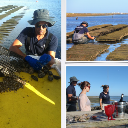 Algarve clam picking & oyster tasting: Spend the day with a local clam picker on his daily clam picking tasks on a traditional fisherman's wooden boat to experience the ancient clam picking skills and secrets. The activity takes place in the heart of the natural park of Ria Formosa, a protected lagoon for different species of fauna and flora.