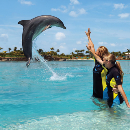 Interact with dolphins and sea lions in their tropical habitats.