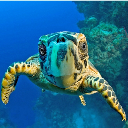 Interact with Cayman's longest residents, the Sea Turtles.