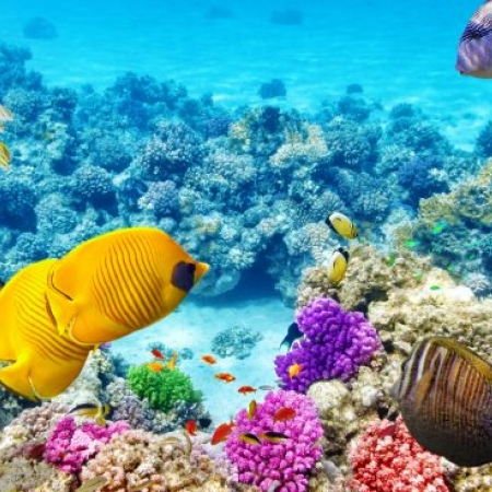 Get up close and personal with the UNESCO listed Great Barrier Reef when you snorkel with Nemo!