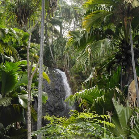 Vallée de Mai: The