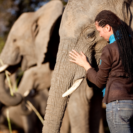 Be humbled by encounters and interactions with majestic elephants