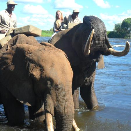 Go on safari on the backs of these gentle giants