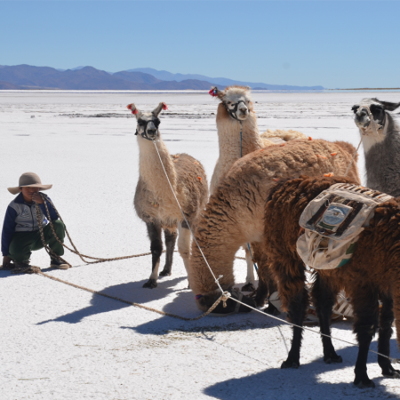 "Trekking with llamas at ""Salinas Grandes"" in Northern Argentina"