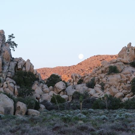 The natural beauty of Joshua Tree National Park is perfect setting for Jeeping, hiking, horseback riding and more.