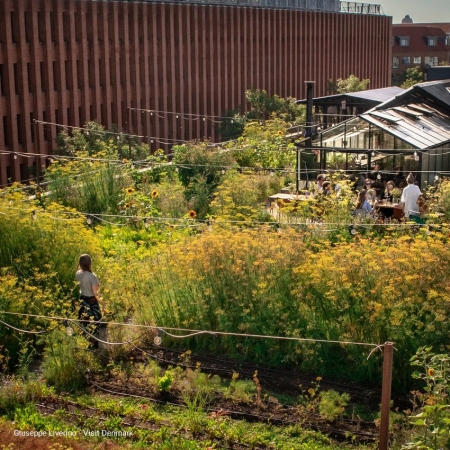 Pop up to a rooftop urban farm for an unforgettable tour, workshop, or a nice exclusive dinner.