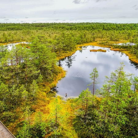 Bike Tour in Lahemaa National Park - Enjoy a ride across Estonian natural and cultural heritage. Bear, wolf, elk, wild board and lynx live here.