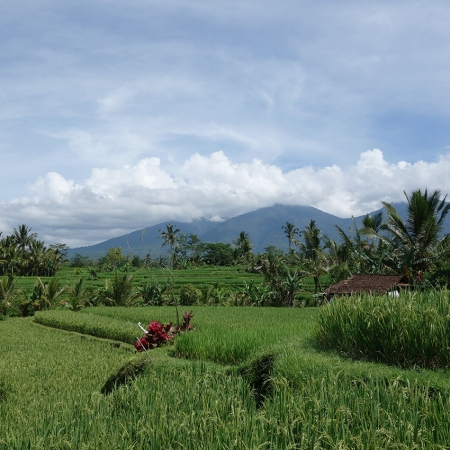 The Kintamani excursion introduces delegates to the natural beauty and culture that Bali is renowned for.