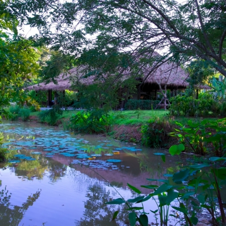 Discover the incredibly diverse flora of Laos at Pha Tad Ke Botanical Garden and learn how Lao people use plants in their everyday life and wellbeing.