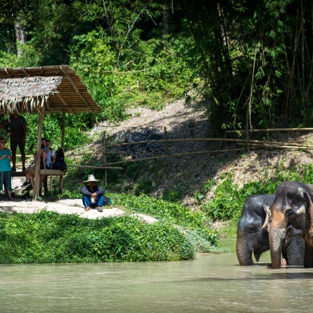 Get to know how professional mahouts live and work alongside their elephants in Chiang Mai.