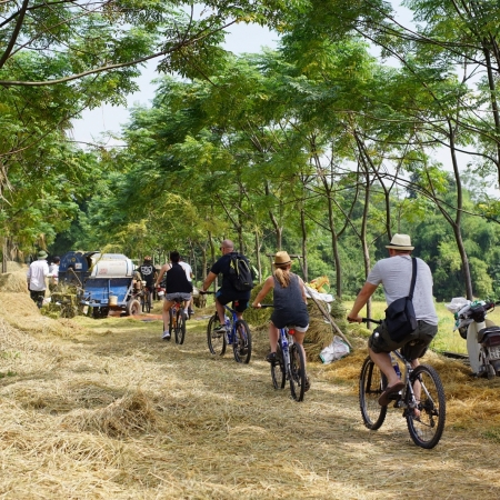 Go off the beaten track and embark on a scenic tour of the Vietnamese countryside by bicycle.