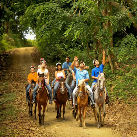 Horseback Riding: Enjoy our countryside adventure along the banks of the river, enjoy our finest leisure Paso Fino horses on the island.