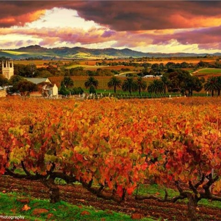 Enjoy Australia's oldest wine region at the world famous Barossa Valley in South Australia