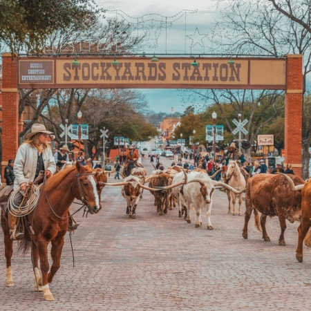 A Day at the Stockyards