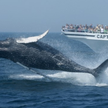 Whale Watching and Harbor Cruises