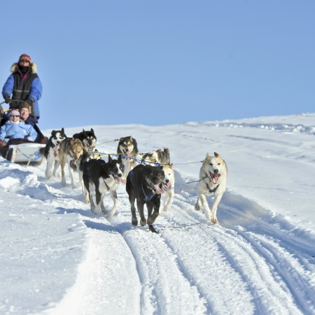 Dog sledding on a glacier