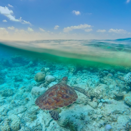 "Explore the mind blowing coral reefs while snorkeling, and even say ""hi"" to turtles"