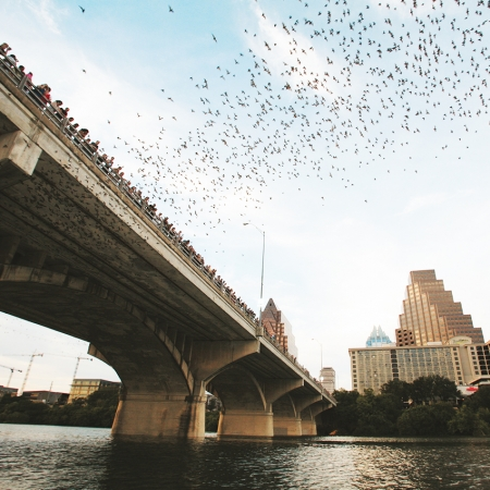 Over 1.5M Mexican free-tailed bats emerge from our Congress Avenue bridge.
