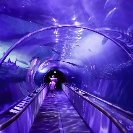 There are many natural history and science museums and experiences to enjoy.