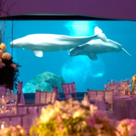 Georgia Aquarium is a timeless backdrop. From a group of 20 board members to an energetic bunch of 2,000 sales reps this venue holds tired and true.  It's a non profit facility dedicated to wildlife research and continues to update it's event spaces and programs.