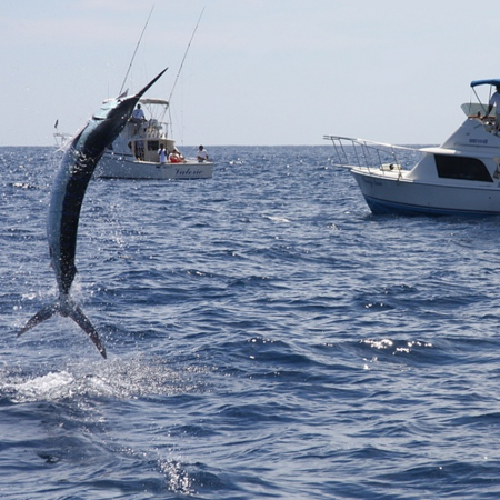 Fishing Capital in Mexico and Marlin Capital of the World, A longtime mecca for big-game fishermen.